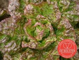 Kropsla 'Wonder der Vier Jaargetijden', Lactuca sativa Biologisch