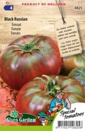 Tomaat 'Black Russian', Solanum lycopersicum