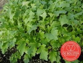 Raapsteel 'Namenia', Brassica rapa subsp. campestris Biologisch