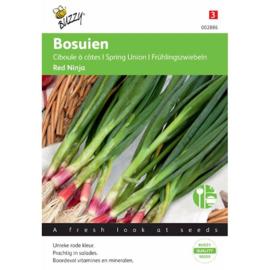 Stengelui lenteui of grove bieslook 'Red Ninja', Allium fistulosum