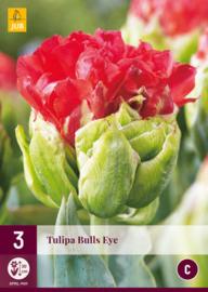 Tulipa dubbel laat 'Bulls Eye'