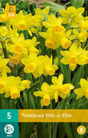 Narcissus botanisch 'Tête-à-Tête'