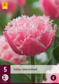 Tulipa dubbel gefranjerd 'Queensland'