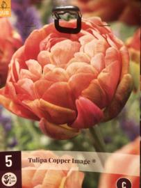 Tulipa dubbel laat 'Copper Image'