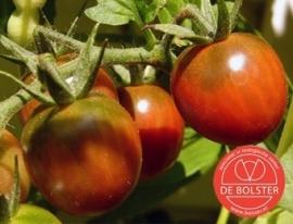 Tomaat 'Cerise', Solanum lycopersicum L. Biologisch