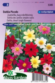 Dahlia variabilis 'Piccolo', Mignon Dahlia
