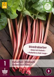Rabarber donker rood 'Holsteiner Blut', Rheum officinale