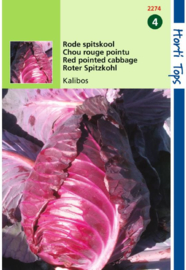 Spitskool 'Kalibos', Brassica oloeracea var. rubra
