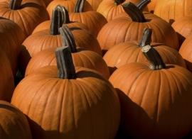 pompoenen(Halloween)
