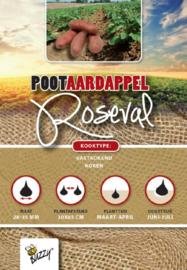 Aardappel vastkokend 'Roseval'