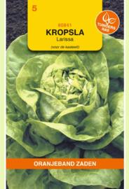 Kropsla 'Larissa', Lactuca sativa