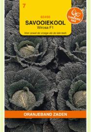 Savooiekool 'Wirosa F1', Brassica oleracea var. sabauda