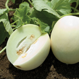 Suikermeloen 'Honey White F1', Cucumis melo