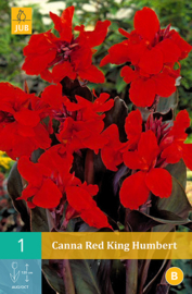 Canna GROOT 'Red King Humbert', Indisch bloemriet