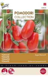 Roma tomaat 'Super Roma Vf', Solanum lycopersicum