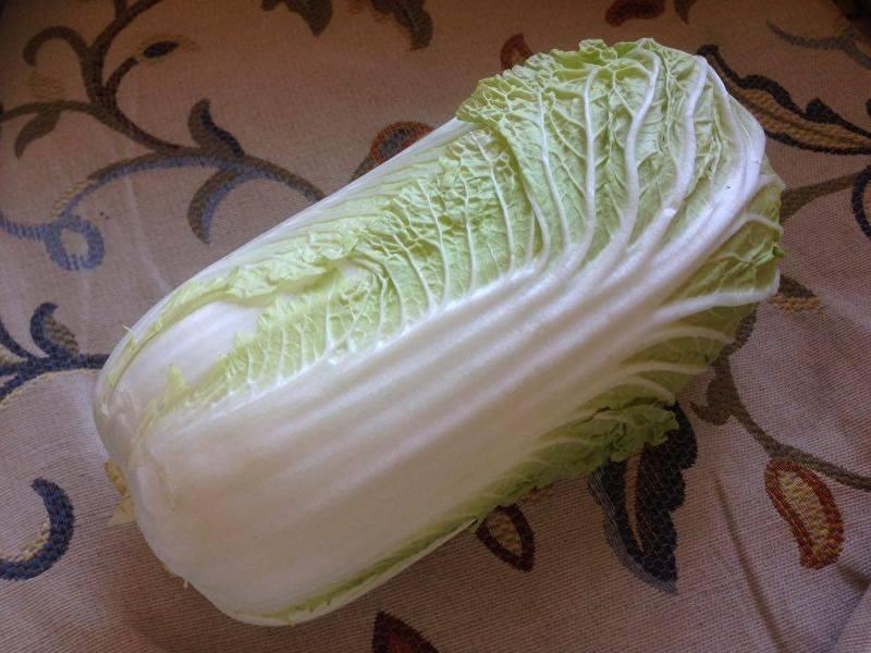 Chinese kool 'Vitimo F1', Brassica rapa var. pekinensis