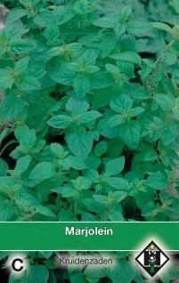 Marjolein, Origanum vulgare
