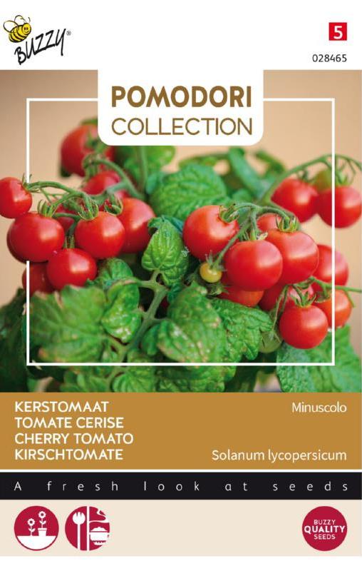Bestomaat 'Minuscolo', Solanum lycopersicum