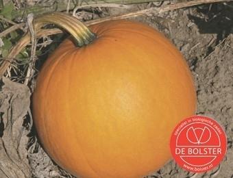 Pompoen halloween 'Jack O'Lantern', Cucurbita pepo Biologisch
