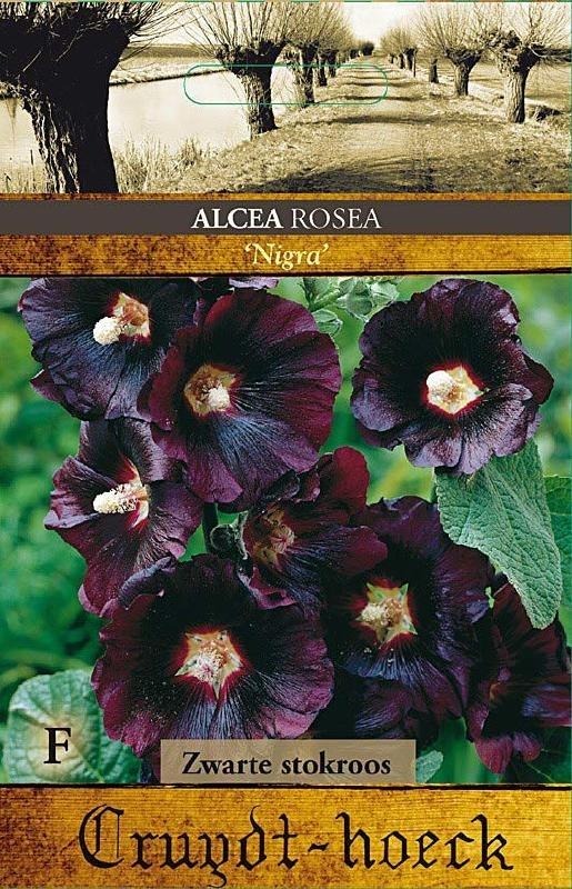 Alcea rosea 'Nigra', Stokroos Zwart