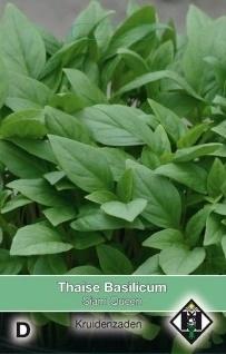 Ocimum basilicum 'Large Leaved'/gewone, Basilicum groen