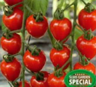 Cherrytomaat 'Gardenberry F1', Solanum lycopersicum