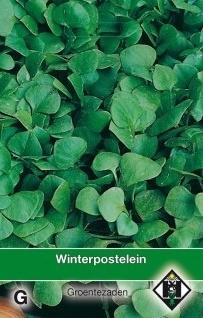 Postelein winter, Claytonia perfoliata