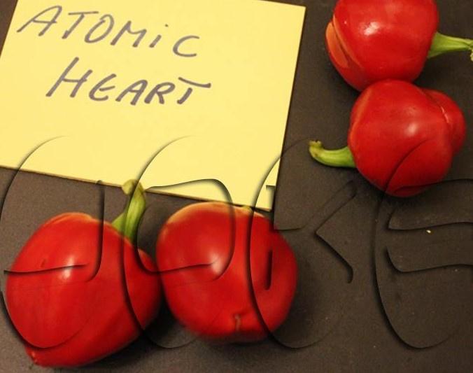Peper 'Atomic Heart', Capsicum annuum