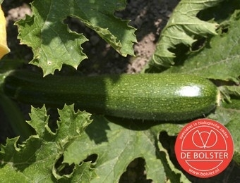 Courgette 'Black Beauty', Cucurbita pepo Biologisch