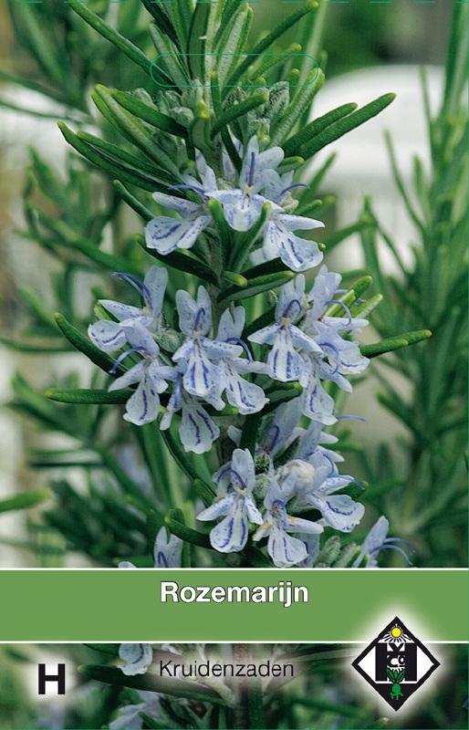 Rozemarijn, Rosmarinus officinalus