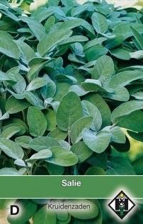 Salie, Salvia officinalis