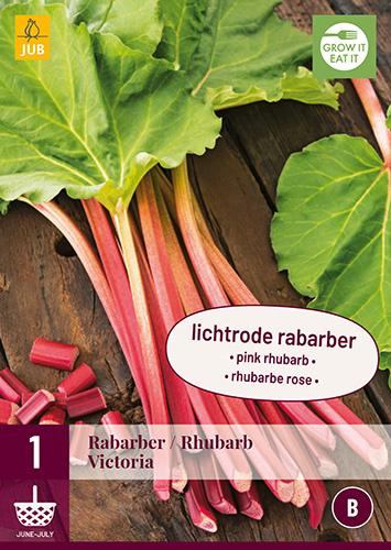 Rabarber roze 'Victoria', Rheum officinale