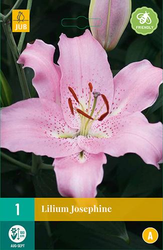 Lilium orientalis 'Josephine'