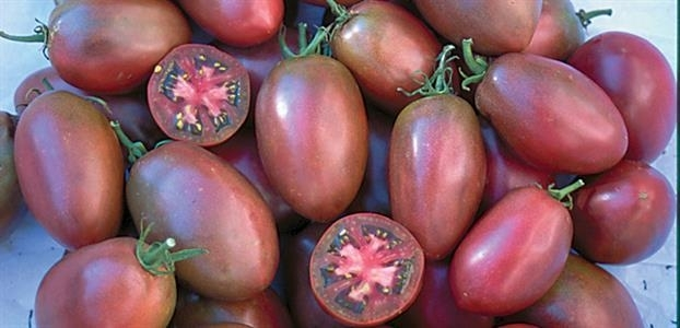Roma tomaat 'Purple Russian', Solanum lycopersicum
