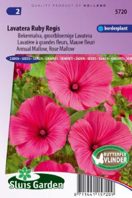 Lavatera trimestris 'Ruby Regis', Lavatera Grootbloemige Bekermalva