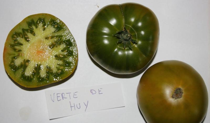 Tomaat vleestomaat 'Verte De Huy', Solanum lycopersicum