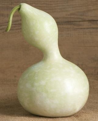 Fleskalebas 'Birdhouse Bottle', Lagenaria siceraria