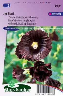 Alcea rosea 'Jet Black', Stokroos Zwart