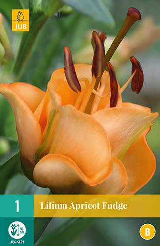 Lilium orientalis 'Apricot Fudge'