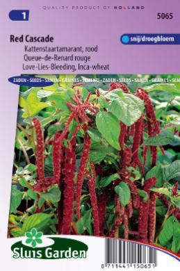 Amaranthus caudatus 'Red Cascade', Kattenstaart