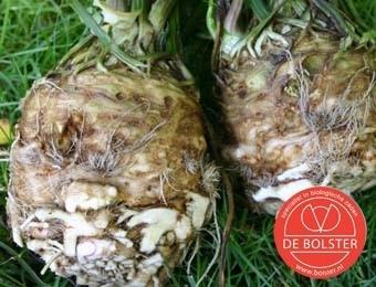 Knolselderij 'Roem van Zwijndrecht', Apium graveolens var. rapaceum Biologisch