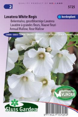 Lavatera trimestris 'White Regis', Lavatera Grootbloemige Bekermalva