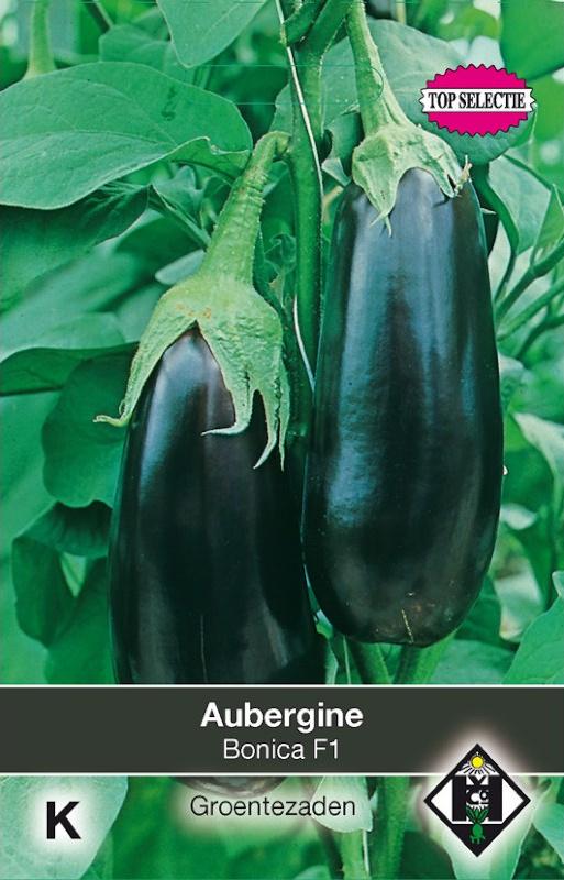 Aubergine 'Bonica F1', Solanum melongena