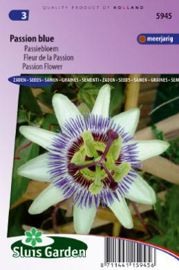 Passiflora caerulea, Passibloem winterhard