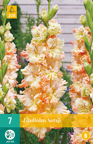 Gladiolus ruffled 'Sotsji'