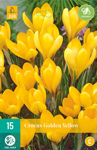 Crocus grootbloemig 'Golden Yellow'