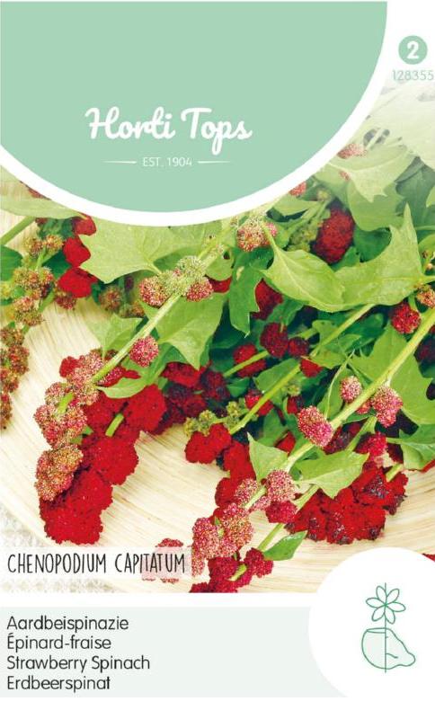 Aardbeispinazie, Chenopodium capitatum / Blitum capitatum