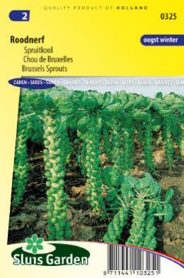 Spruitkool 'Roodnerf', Brassica oleracea var. gemmifera