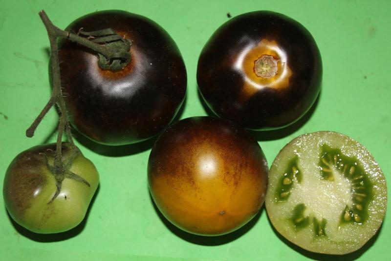 Tomaat 'Muddy Waters', Solanum lycopersicum L.