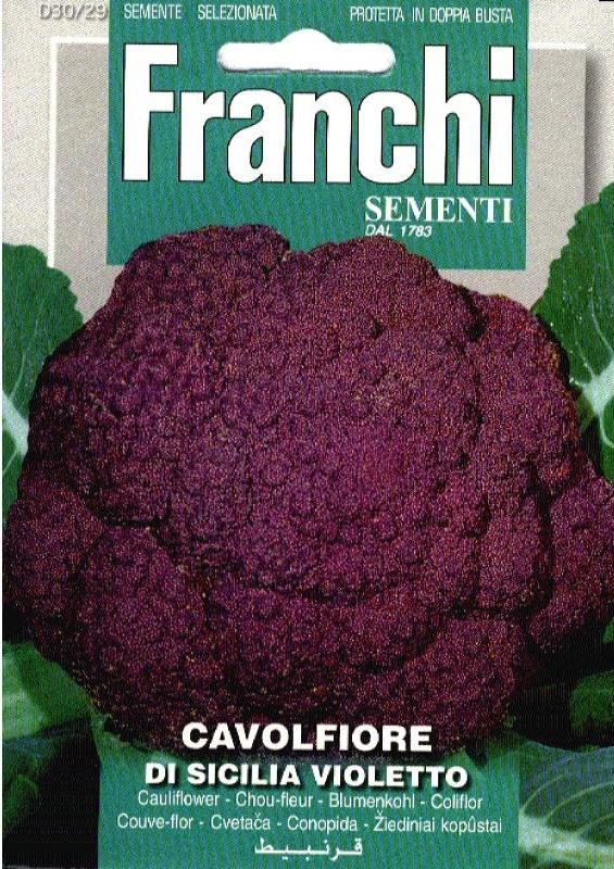 Bloemkool 'Sicilia Violetto', Brassica oleracea var. botrytis